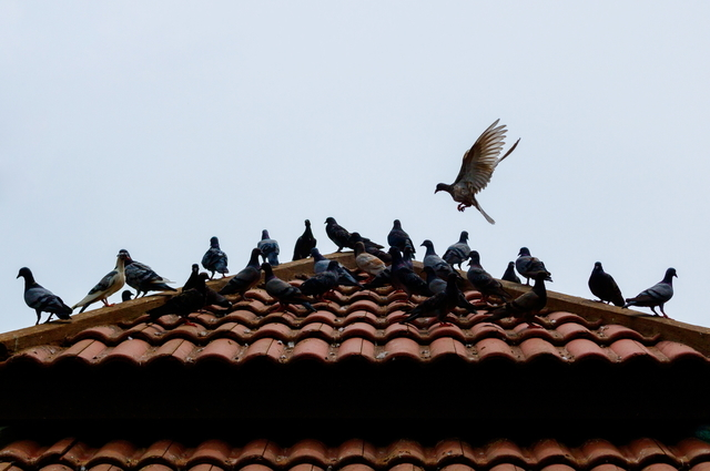 , What To Do When Birds Are Ruining Your House