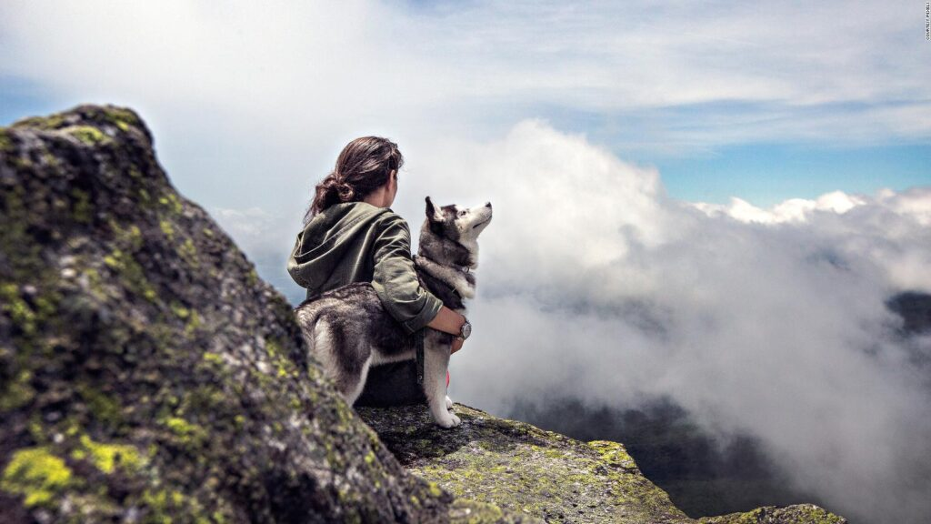 Simple Tips For Traveling With Dogs
