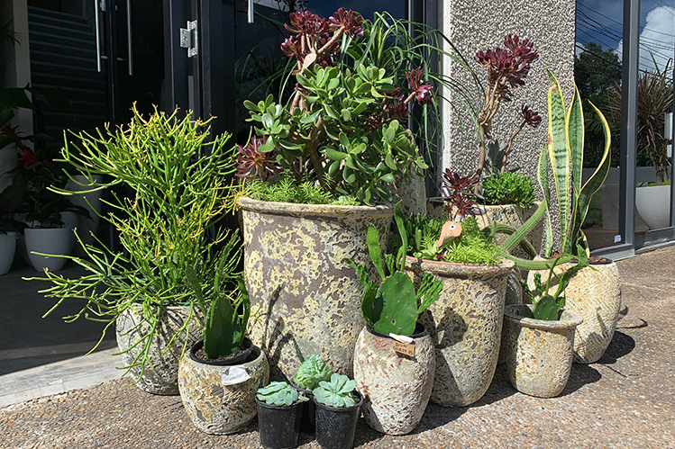 How to Make the Most of Cluster Pots?