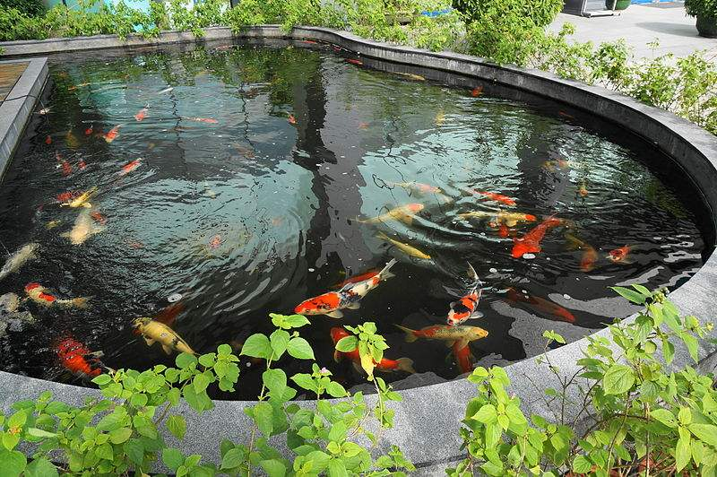 The Role of Pond Treatment Companies to Deal with Several Pond Issues