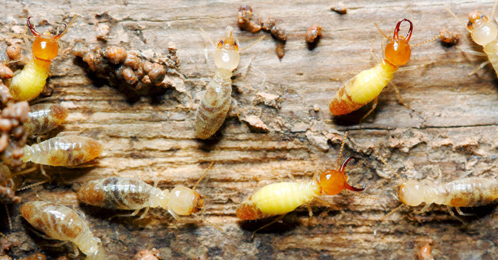 Some Less Visited Parts of Your Home That Are Usually Pest Hotspots