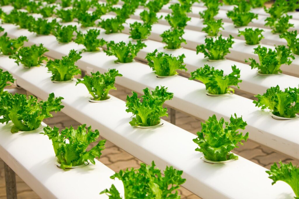 The Best Ideas for Perfect HydroponicGarden Kit System for Healthy Garden