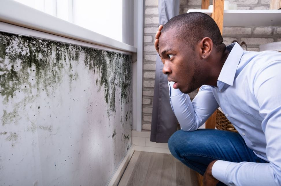 When Should You Get a Mold Inspection Of Your place?