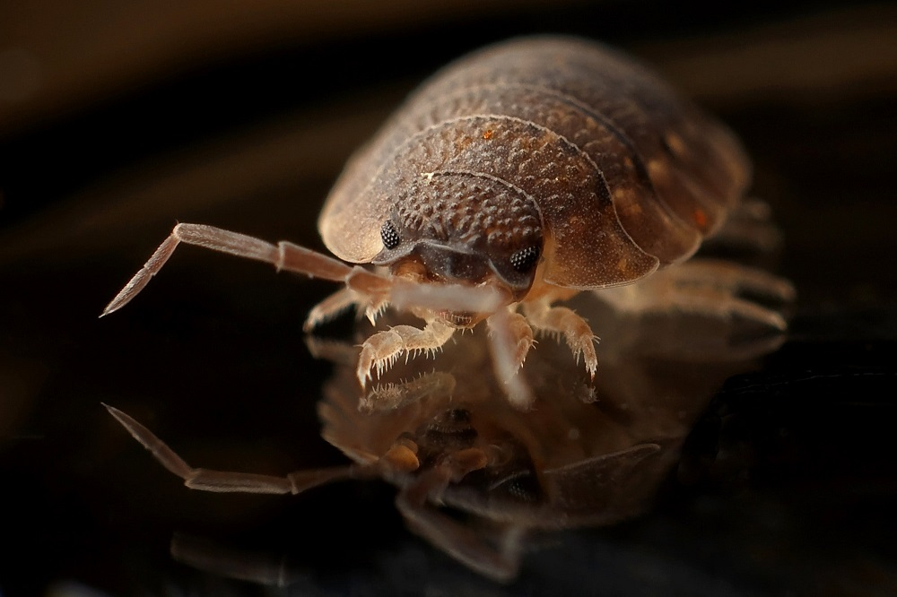Essential Usage of Pest Control Services: