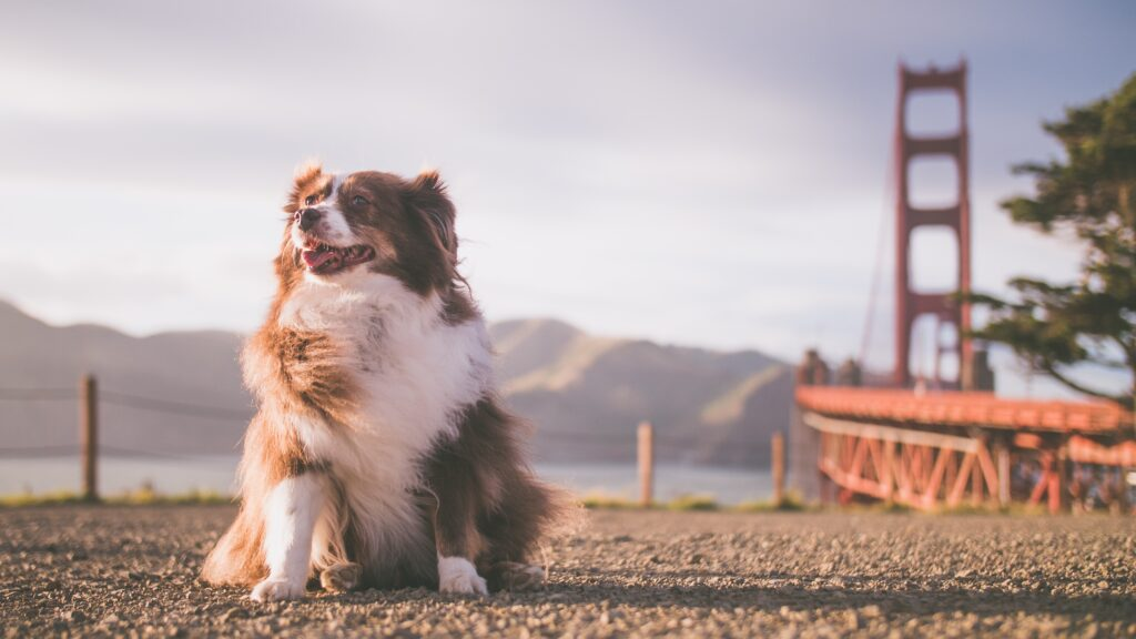 ALL ABOUT PRIVATE DOG TRAINING