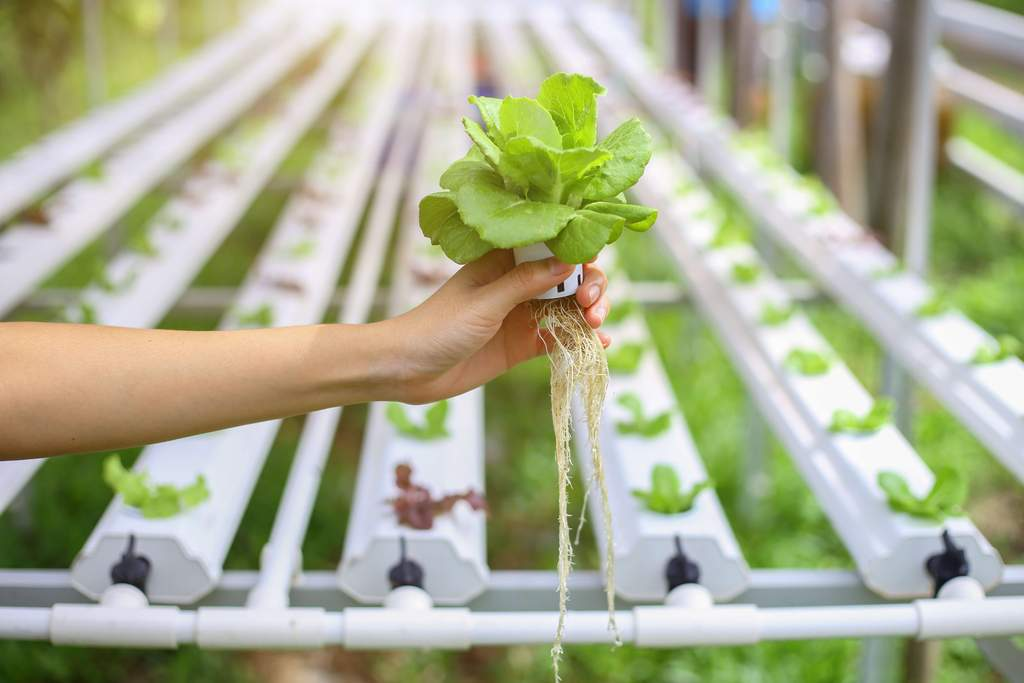 Hydroponics, What to Know About the Process of Hydroponics?