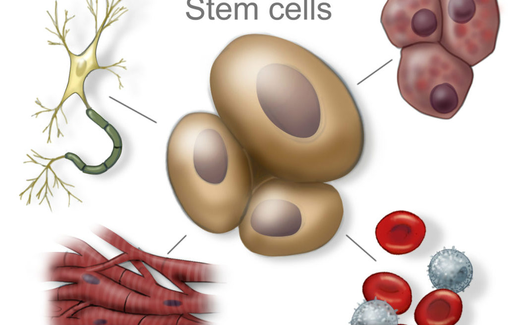 Stem Cell Therapy for Cerebral Palsy, Discover the world of Stem Cell Treatment from the leading care institutes