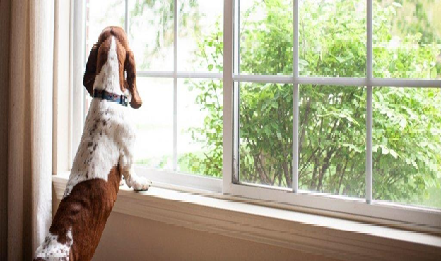 Tips on Transitioning your Dog when you go back to the office