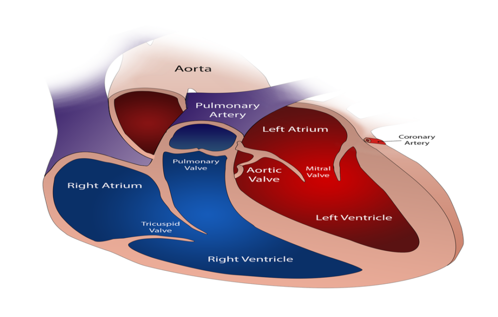 Need to Know Recent Advances in Aortic Valve Replacement