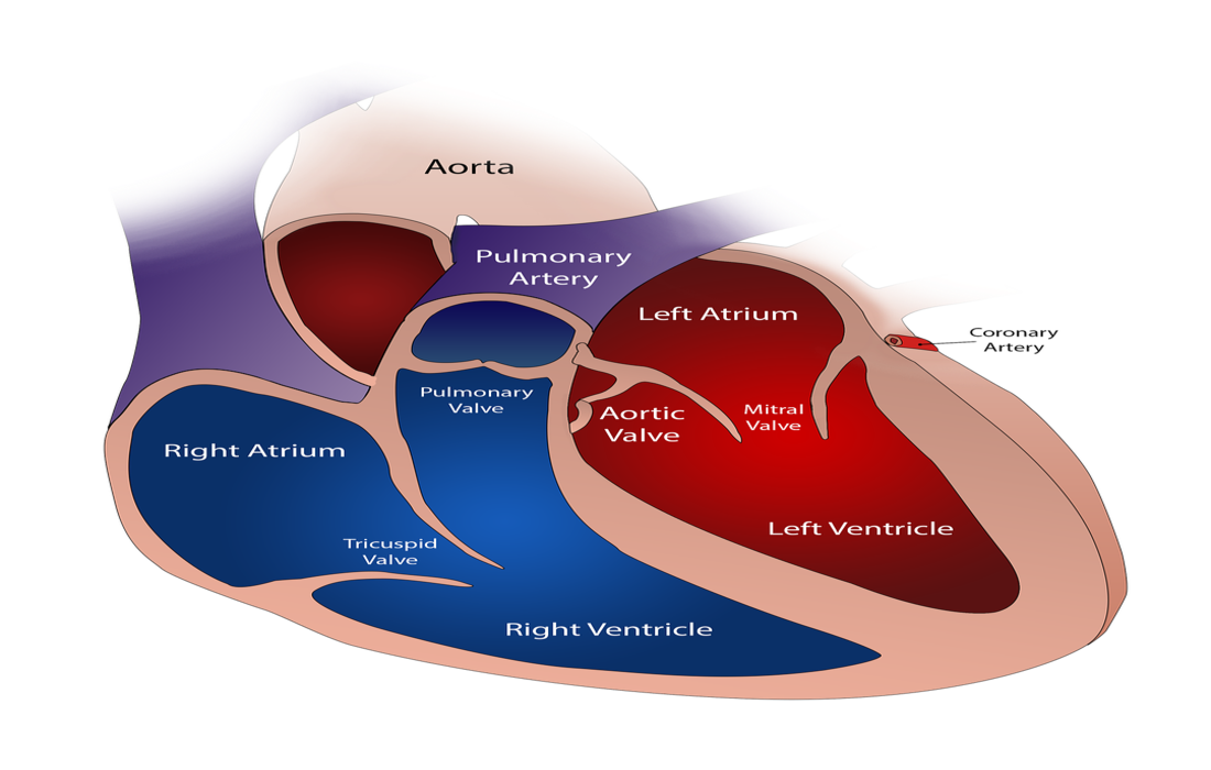 heart valve replacement cost in India, Need to Know Recent Advances in Aortic Valve Replacement