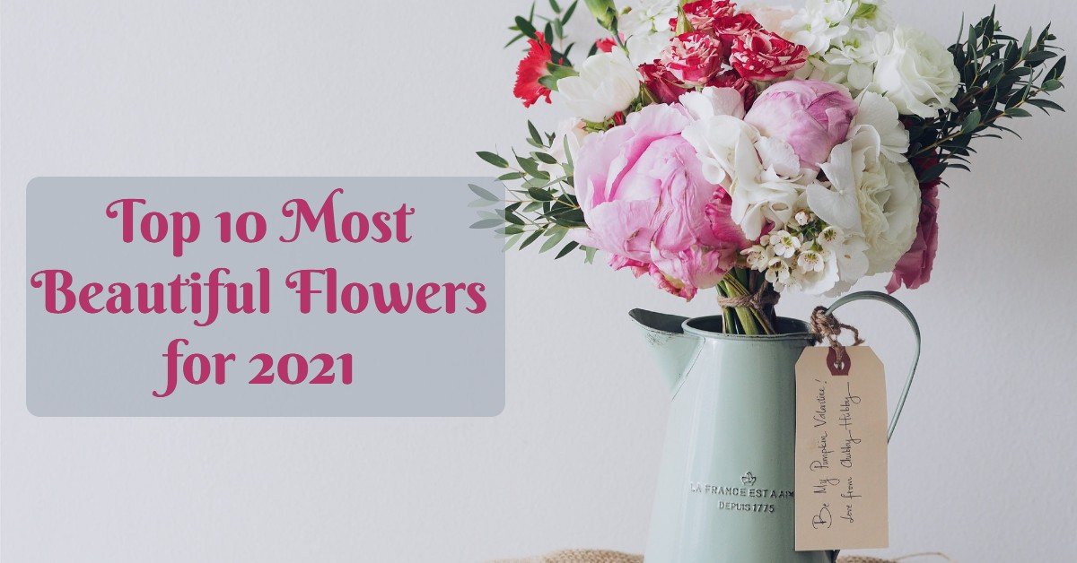 new year flowers, Top 10 Most Beautiful Flowers for 2021
