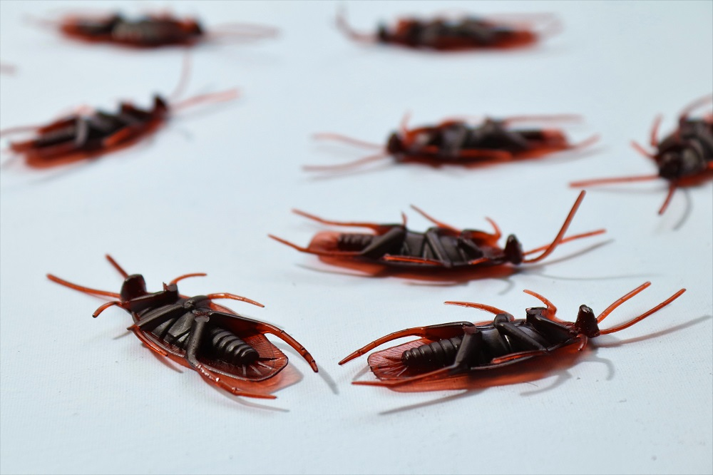 How to Choose a Top Pest Control Company?