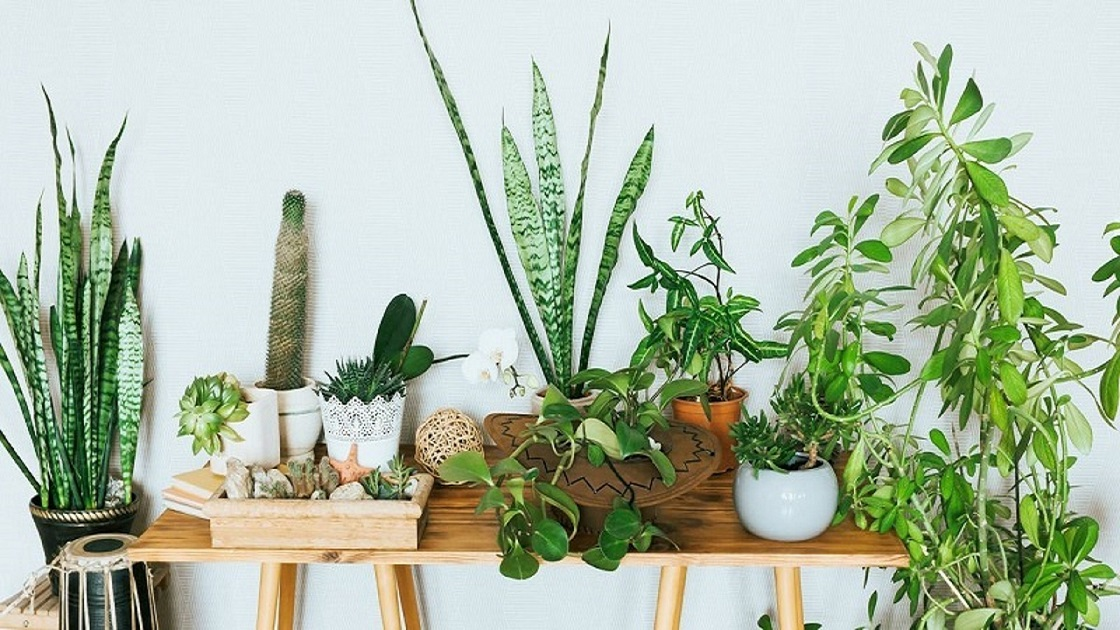 buy plants online, 6 Home Decorating Tips Influenced by Plants and Greenery