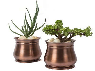 Find the Best Succulent Window Sill Planters