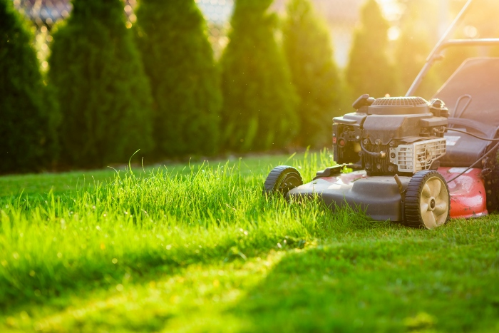 Make Lawn Maintenance Easy with These 10 Tips