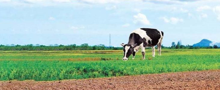 Want to Buy/Sell Livestock online? Go for Tractor Junction.