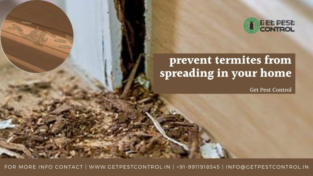 How to prevent termites from spreading in your home