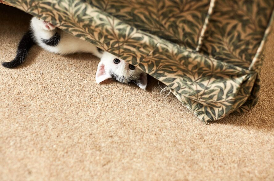 Tempting Ways to Help Your Scared Kitten Be More Sociable