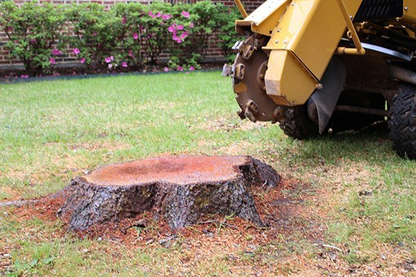 What are the Benefits of Getting Stump Grinding Services in Sydney?
