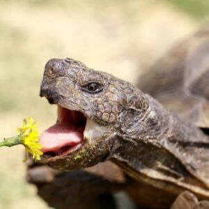 reptile pets food